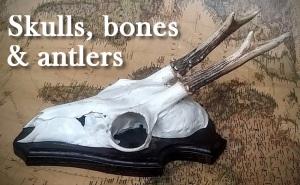 featured_skulls