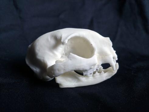 Replica cat skull (2)