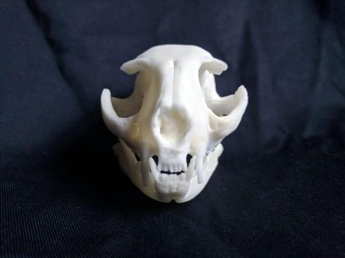 Replica cat skull (5)