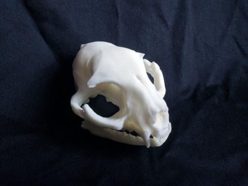 Replica cat skull (6)